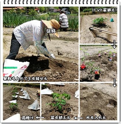 夏野菜(1)