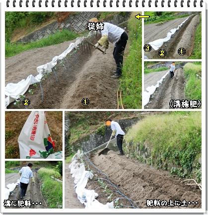 人参・ゴボウ畑1