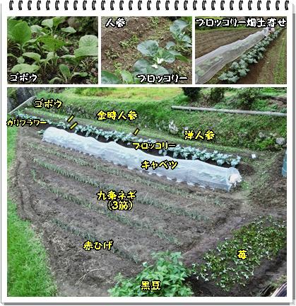 冬野菜畑2
