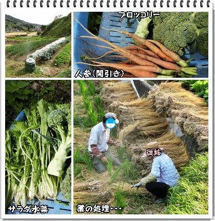 収穫野菜&藁