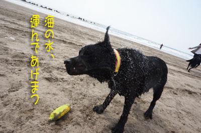 2016 片貝(28)