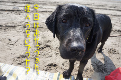 2016 片貝(19)