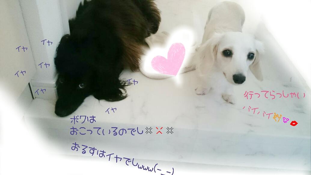 160610_roses_01.jpg