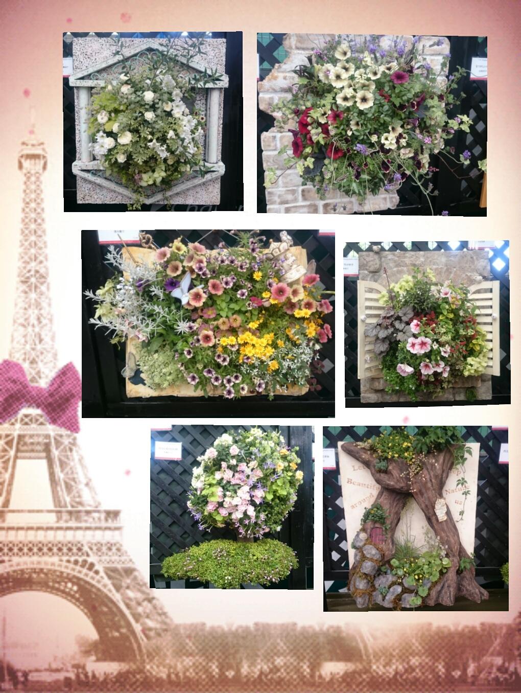 160610_roses_10.jpg