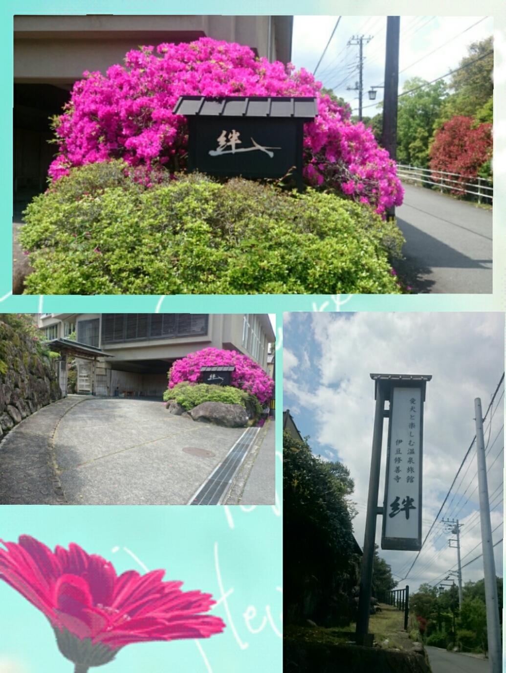 160803_kizuna1_07.jpg