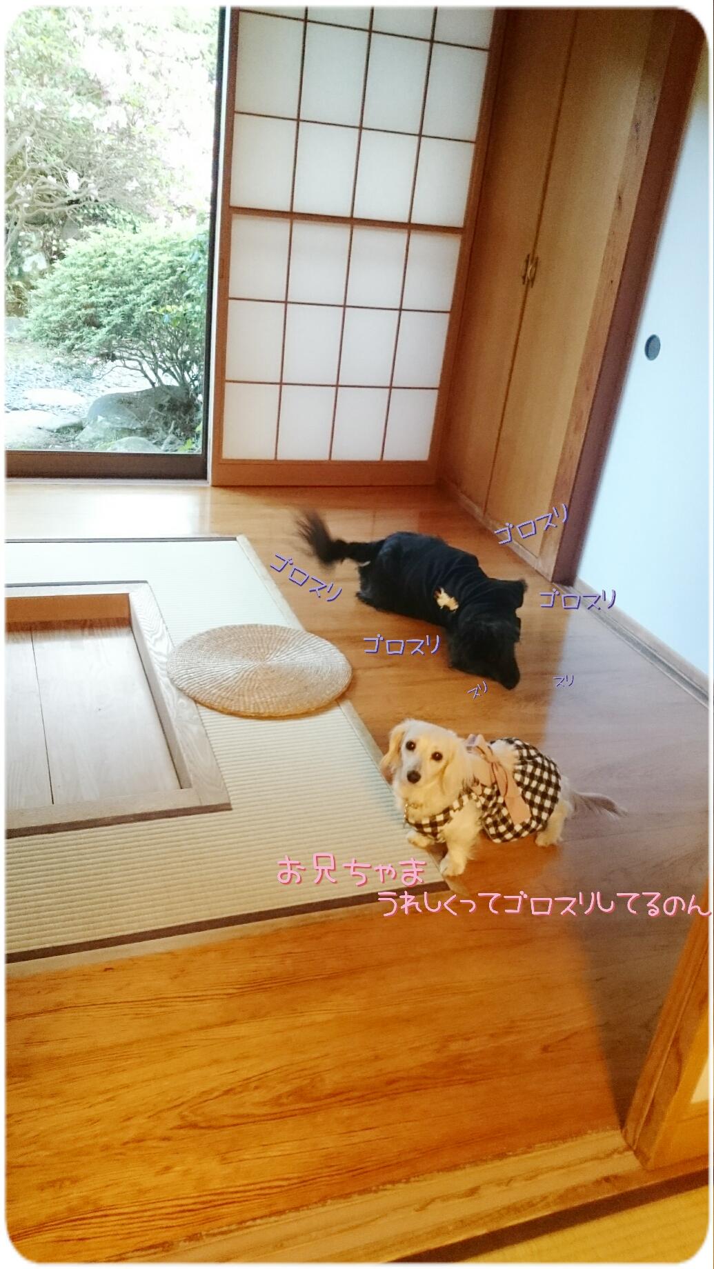 160824_kizuna3_02.jpg