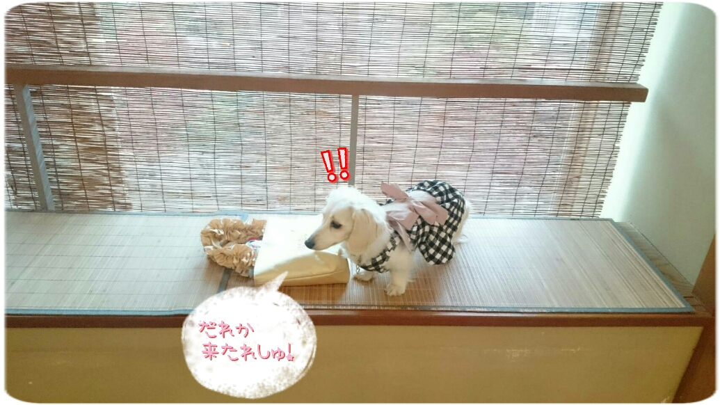 160824_kizuna3_05.jpg