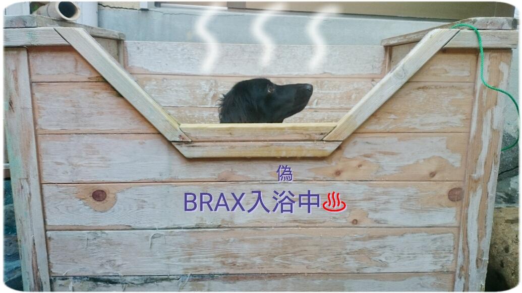 160824_kizuna3_12.jpg