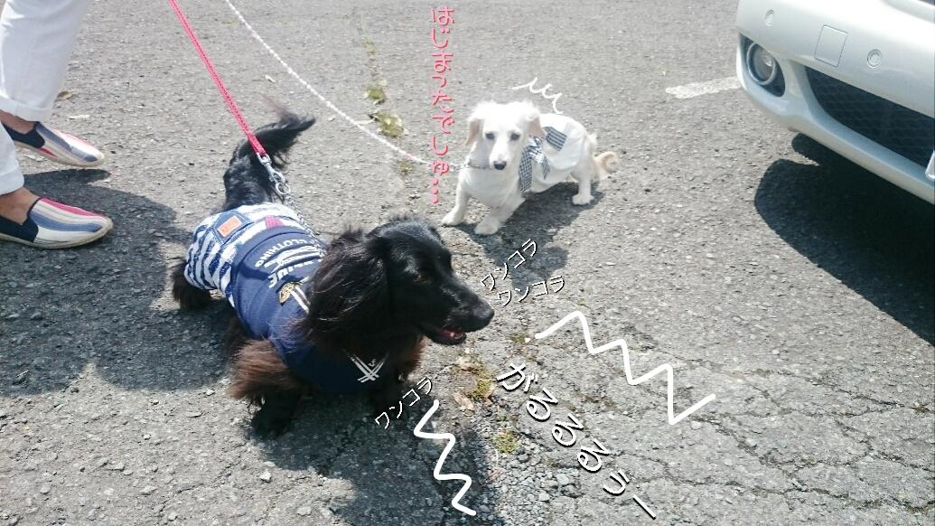 160831_kizuna4_12.jpg