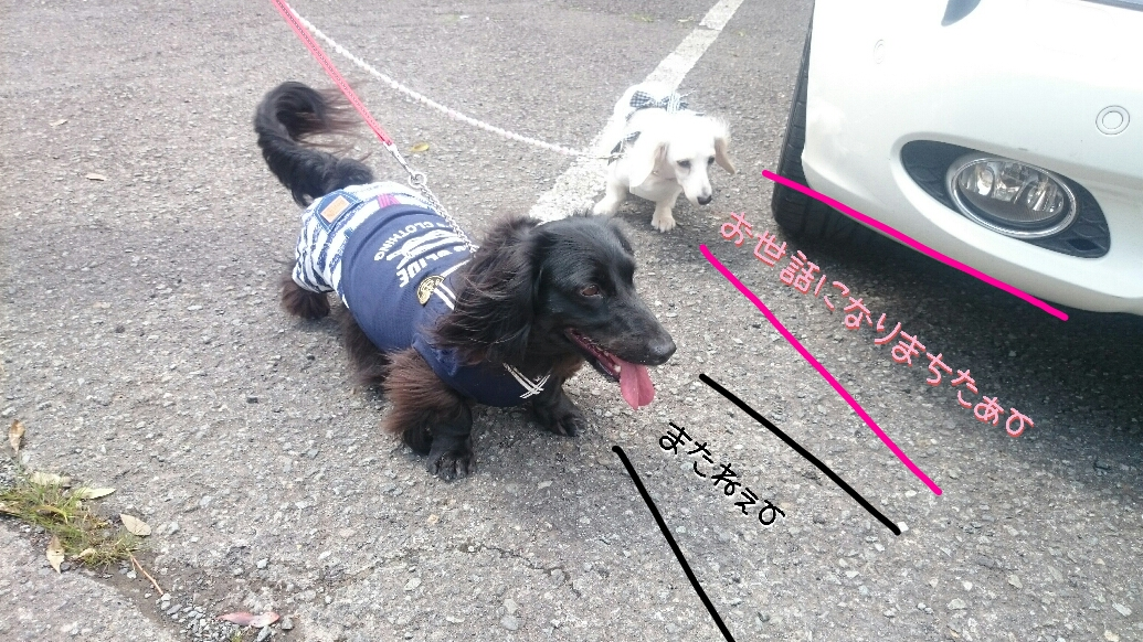 160831_kizuna4_13.jpg