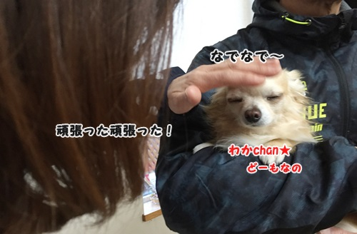 IMG_9667.jpg