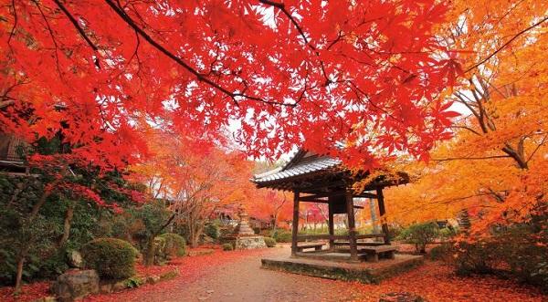 京都-紅葉