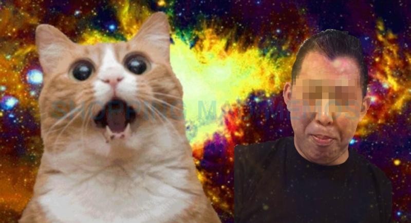 s-cat2.png