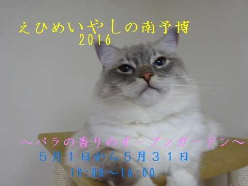 20160430 すみれ①