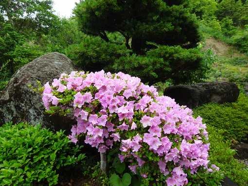 20160605 雨季のお庭