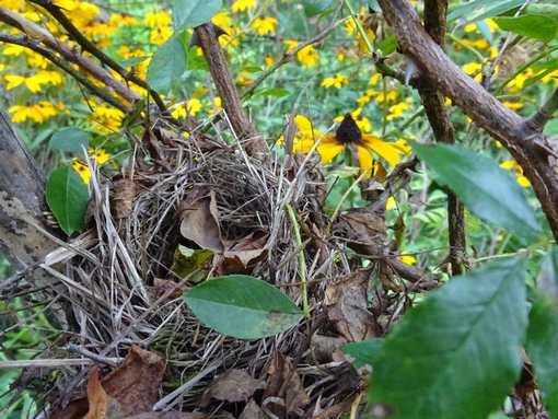 20150717 小鳥の巣