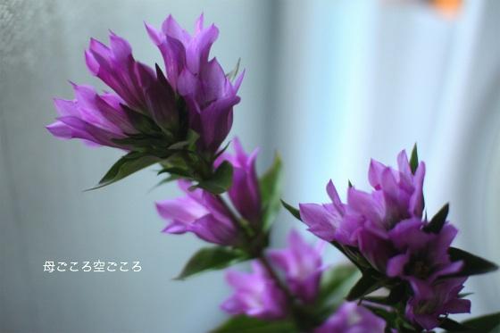 sIMG_7714B.jpg