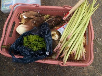 4.13山菜収穫