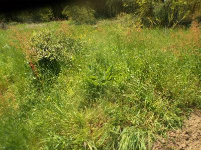 4.20草刈前