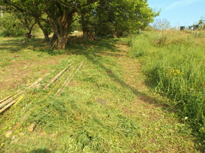 4.30草刈