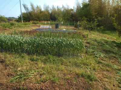 4.30草刈をした畑