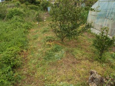5.1ハウス裏も草刈完了