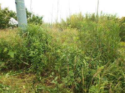 6.8草と竹の成敗1