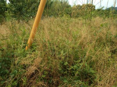 6.8草と竹の成敗2