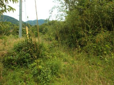 6.8草に竹だらけ