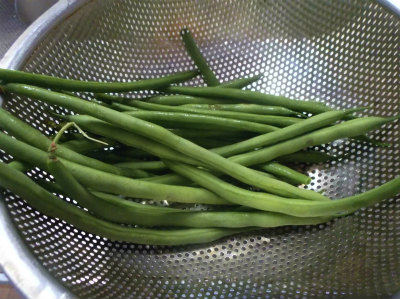 6.8インゲンの初収穫