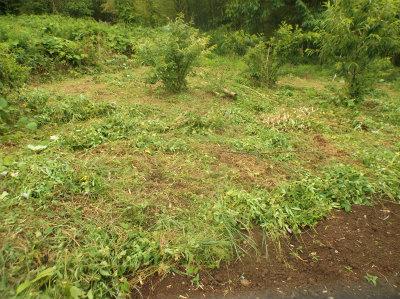 6.12奥部の草刈
