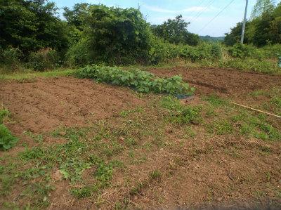 6.18ジャガイモ収穫後