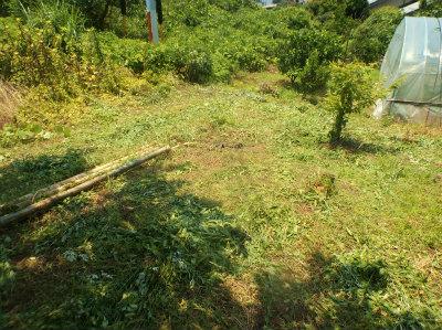 6.26ハウス裏の草刈