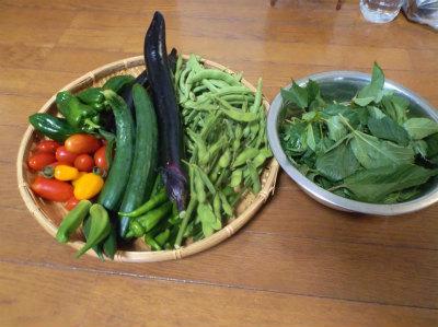 7.3収穫
