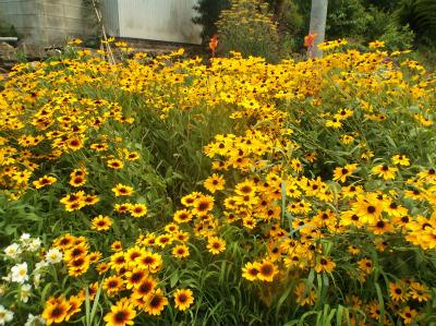 7.6空地の花1