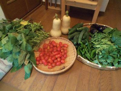 7.16収穫物