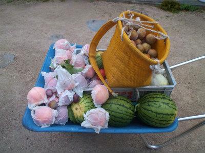7.24採った果物