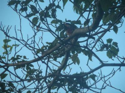 7.29庭に来る鳥1