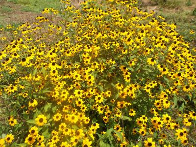 8.17空地の花