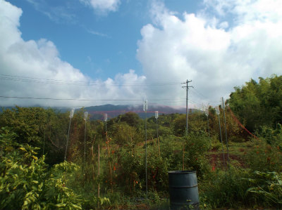 8.17雨上がりの畑