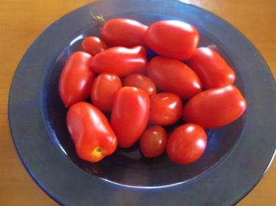 8.6常備トマト