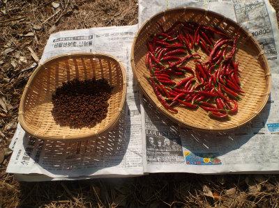 8.21鷹の爪と山椒の乾燥