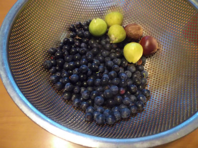8.24果樹の収穫