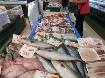 9.10魚が並び出した2
