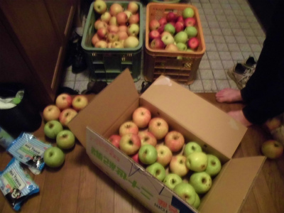 10.8貰ったリンゴ1