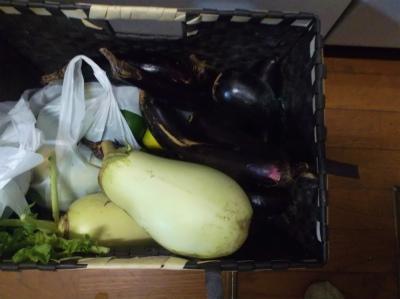 10.9収穫した野菜2