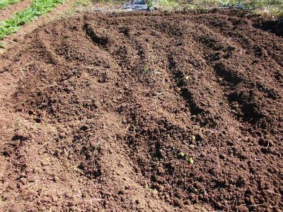 10.14トマト後の耕耘