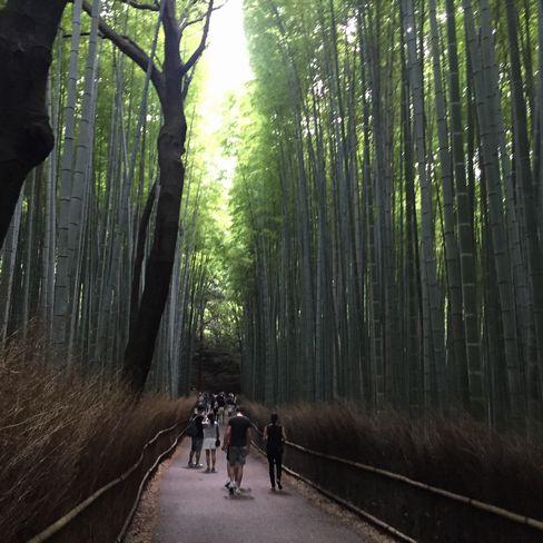 竹林の道_H28.07.01撮影