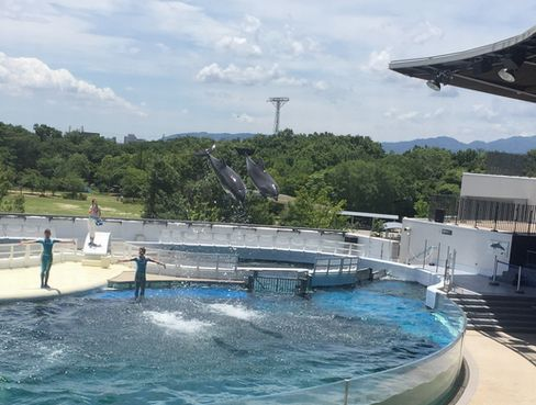 京都水族館・イルカショー_H28.07.02撮影