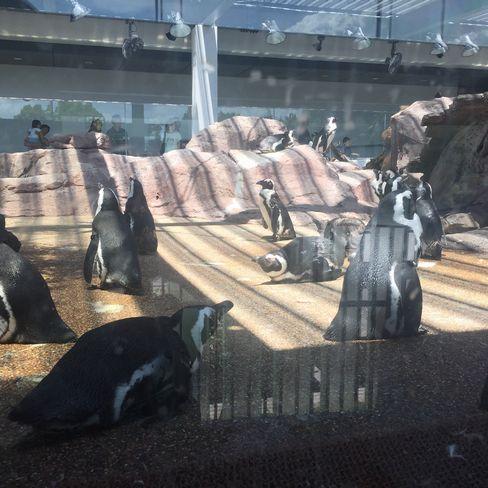 京都水族館・ペンギン_H28.07.02撮影